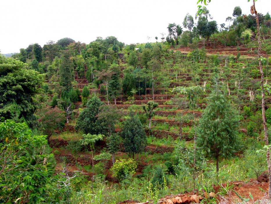 Photo of an agroforest